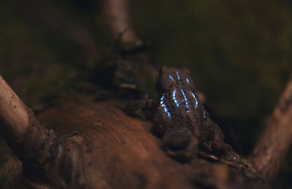 http://www.thisiscolossal.com/2015/01/a-bioluminescent-forest-created-with-digital-projection-mapping/