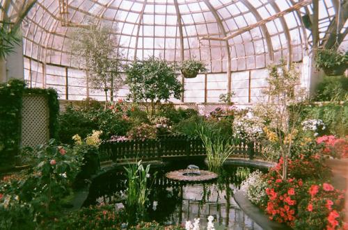Widok na ogród w szklarni
