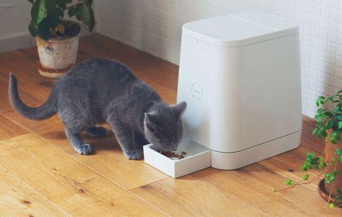 Petly-cat