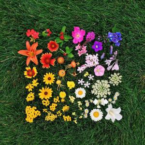 kwiaty emily blincoe