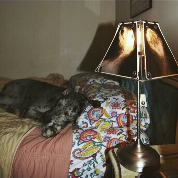 animal-x-ray-lamp-shade-veterinary-oncologist-spike-vain-8-605x605