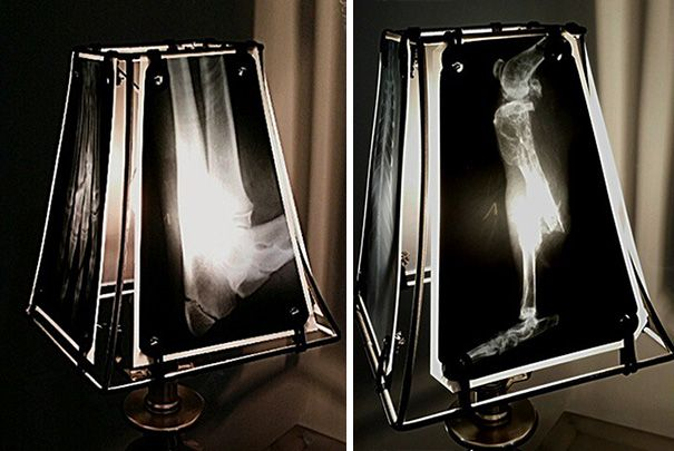 animal-x-ray-lamp-shade-veterinary-oncologist-spike-vain-3