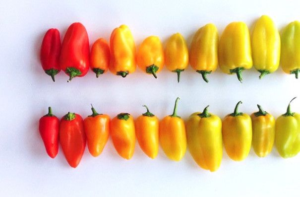 colorful-food-arrangement-photography-foodgradients-brittany-wright-13-605x397