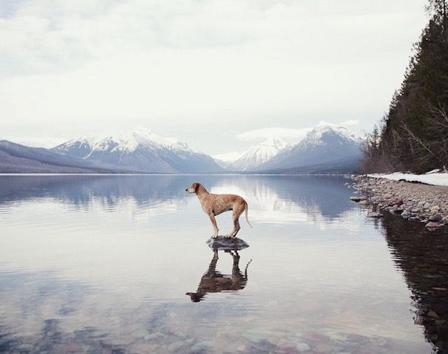 lifedog10