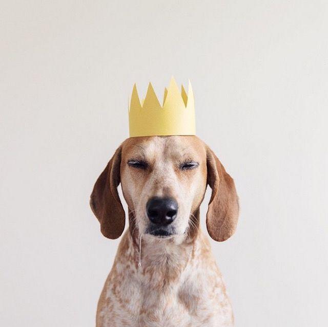 lifedog2