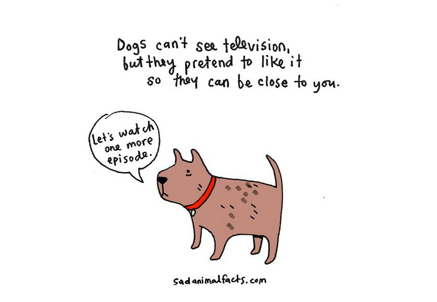 cute-illustrations-sad-animal-facts-brooke-barker-10__880