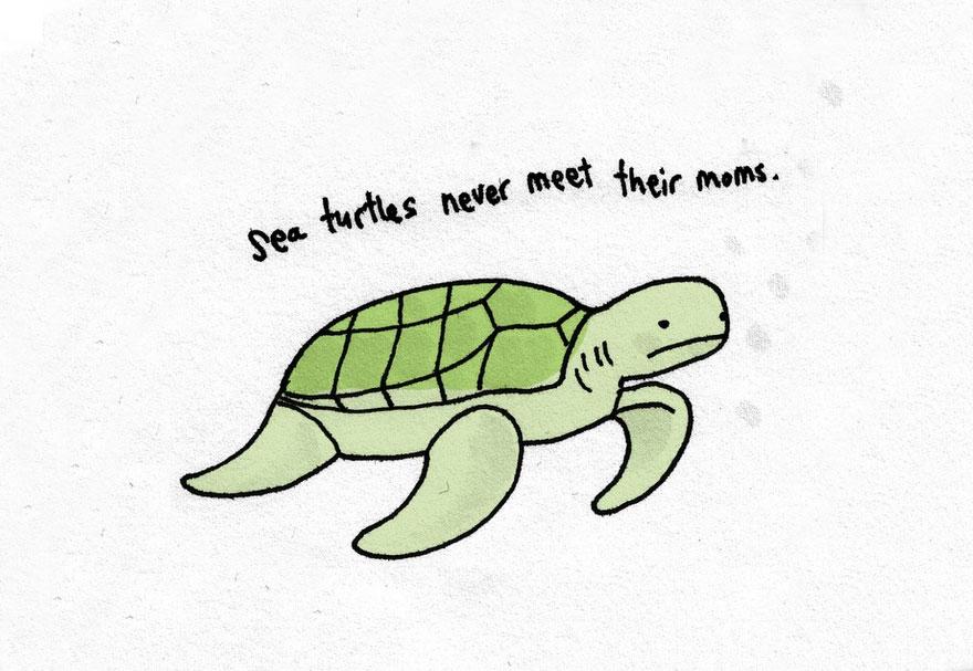 cute-illustrations-sad-animal-facts-brooke-barker-14__880
