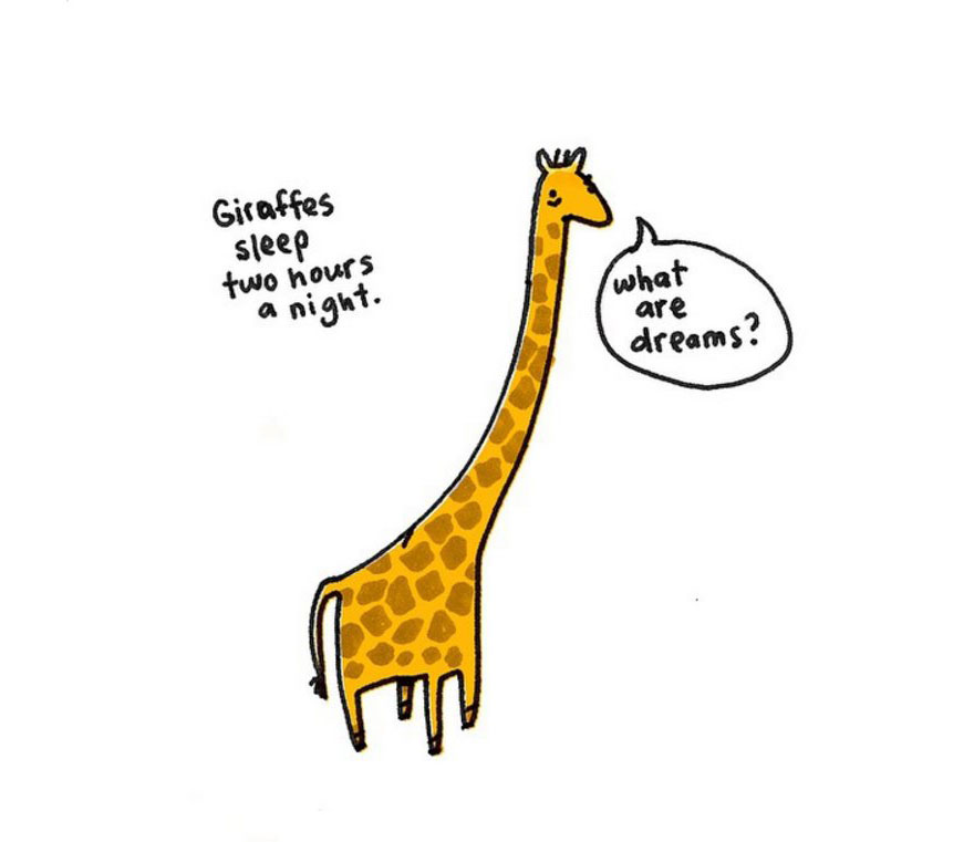 cute-illustrations-sad-animal-facts-brooke-barker-18__880