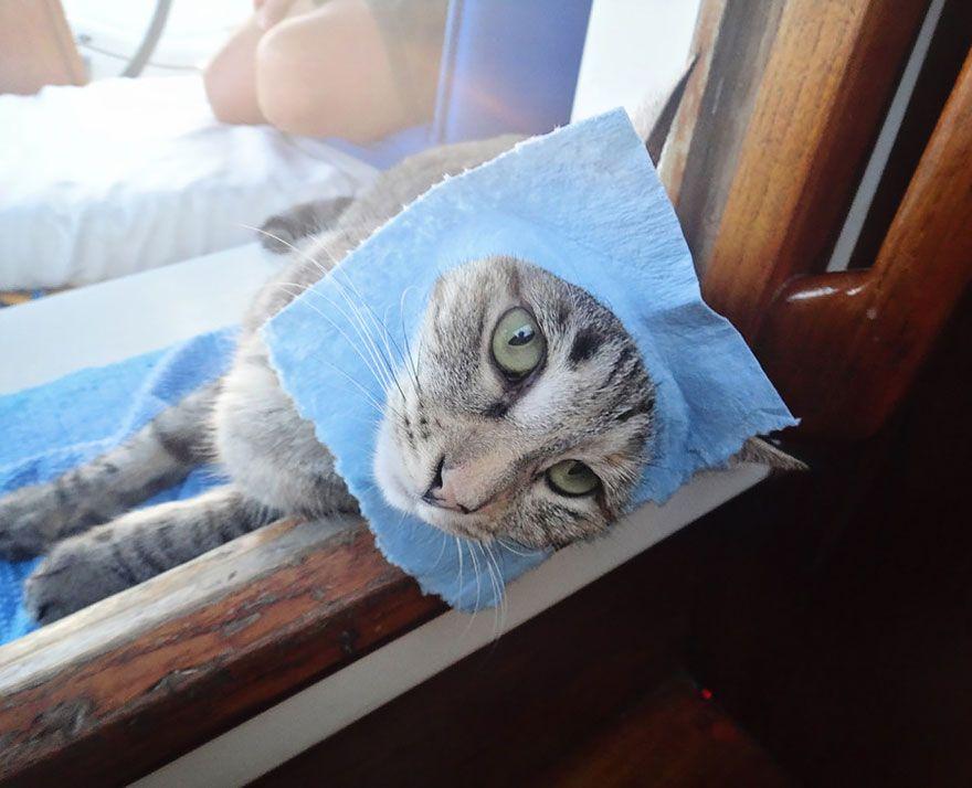 couple-sells-everything-travels-world-cat-matt-jessica-johnson-26