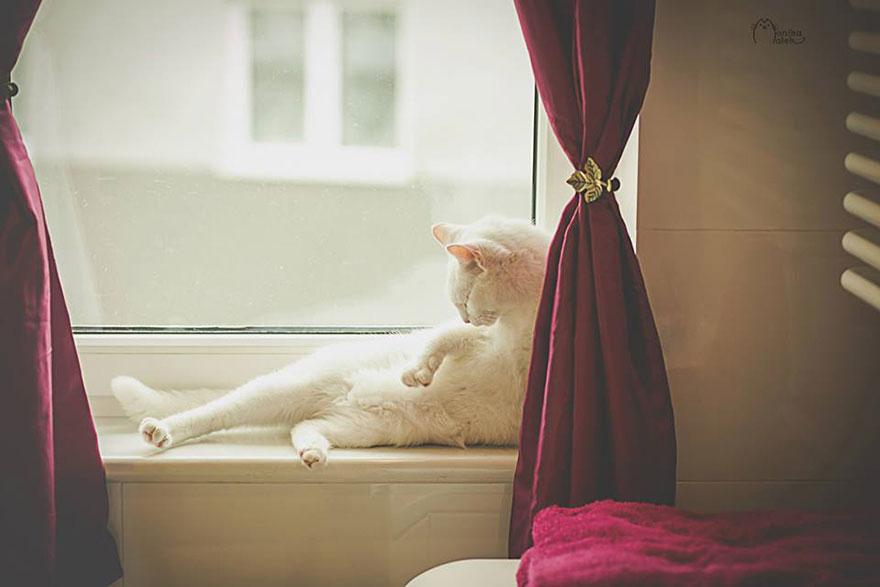 I-am-still-cat-1__880