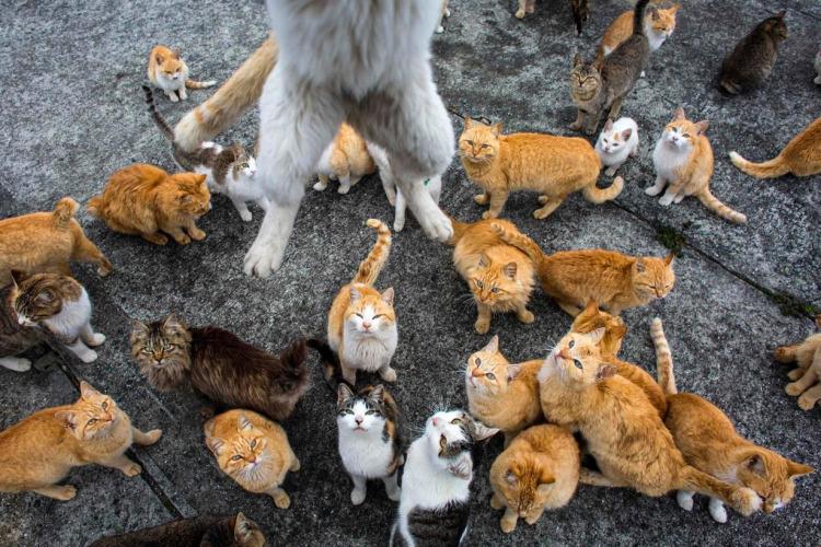 Its-Raining-Cats