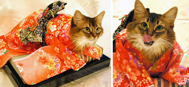 cat-kimonos-japan-1-1 (1)