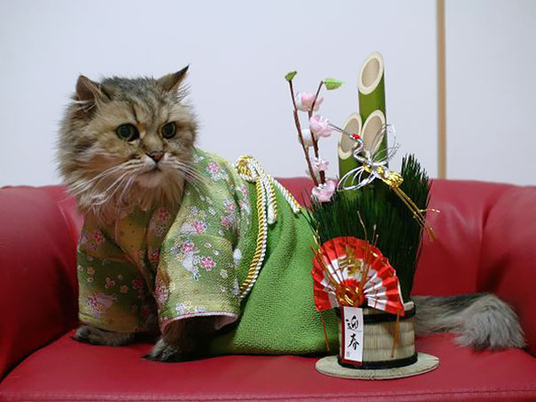 cat-kimonos-japan-11__605