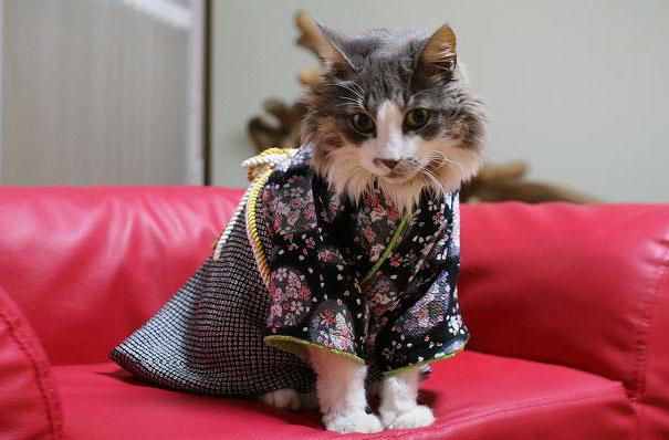cat-kimonos-japan-13__605