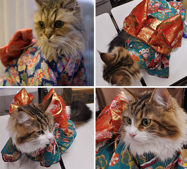 cat-kimonos-japan-14__605 (1)