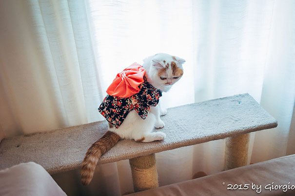 cat-kimonos-japan-16__605