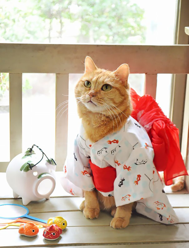 cat-kimonos-japan-21__605
