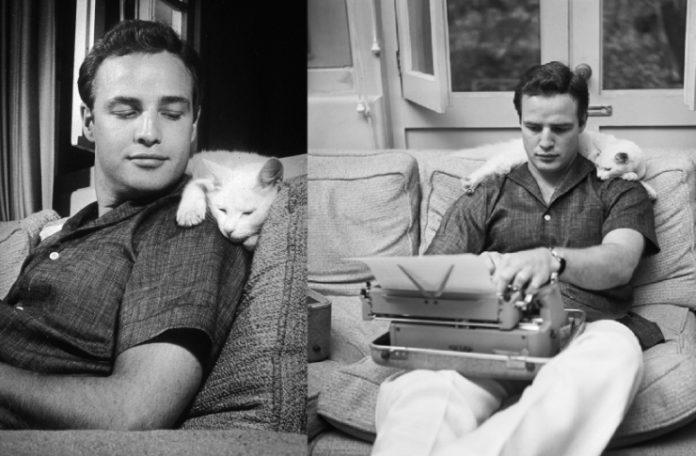 Mężczyzna siedzący na kanapie z kotem na ramieniu