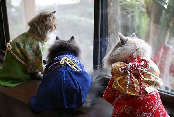 cat-kimonos-japan-5__605