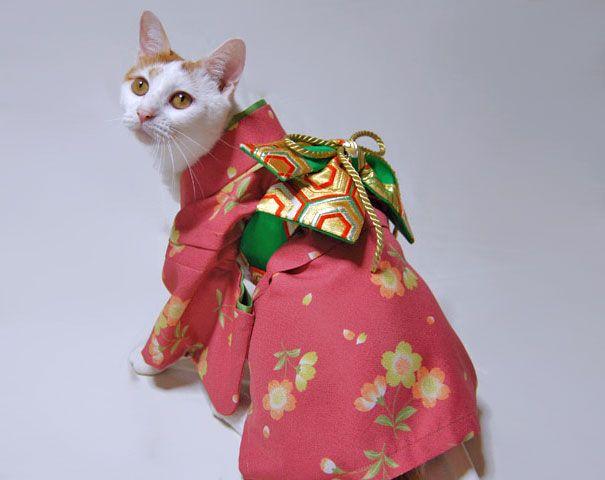 cat-kimonos-japan-7__605