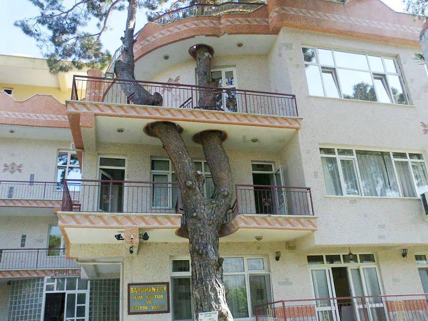 Drzewo było tu pierwsze