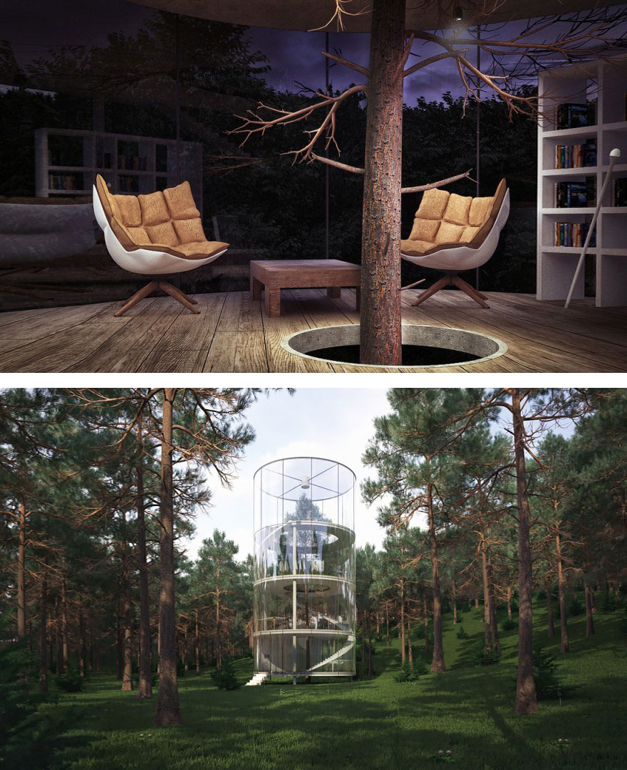 Szklany dom zbudowany wokoł drzewa