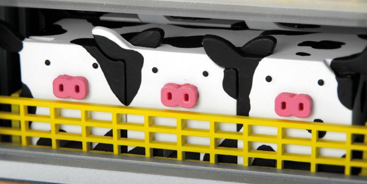 cows close up CV1A9643