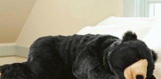 Czlowiek ubrany w śpiwór, który wygląda jak niedźwiedź