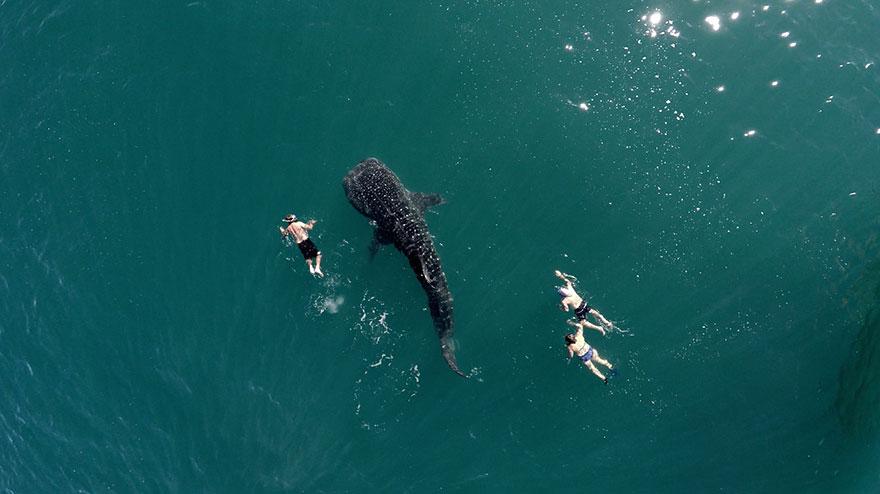 najlepsze zdjęcia z dronów wieloryb i kąpiący się ludzie Magazyn HIRO