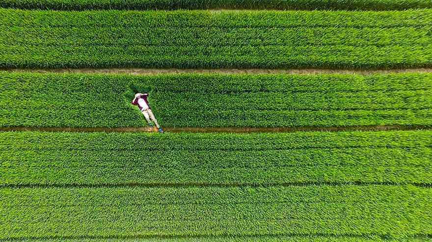 opalanie w trawie najlepsze zdjęcia z dronów Magazyn HIRO