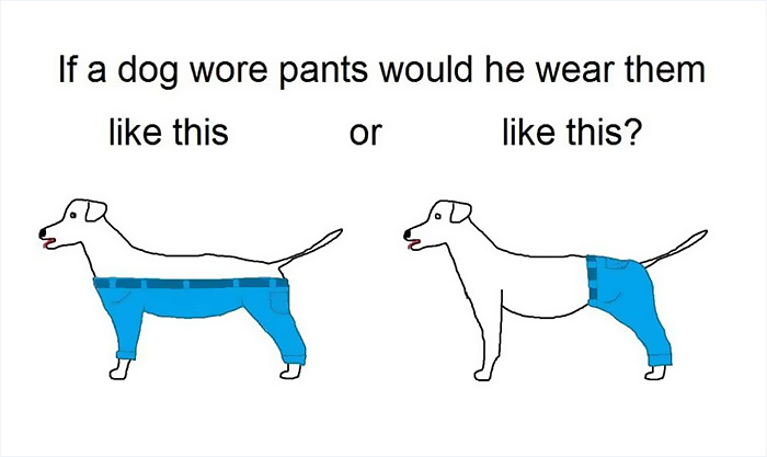 tough-questions-funny-if-dog-wear-pants-7