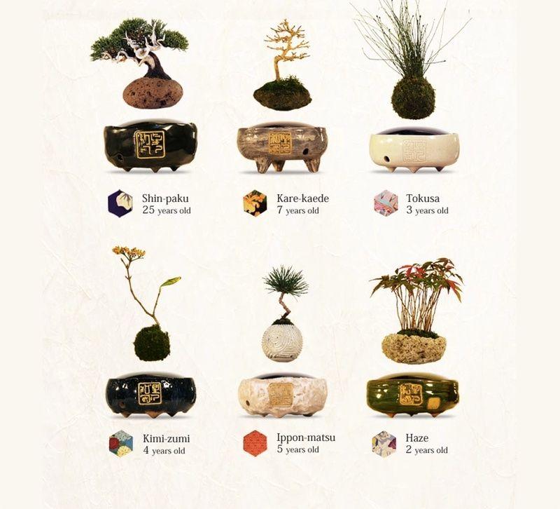 floating_bonsai_tree_types.0