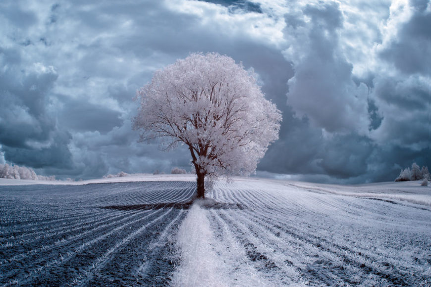 the-majestic-beauty-of-trees-captured-in-infrared-photography__880