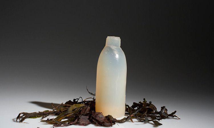 butelka-z-alg2