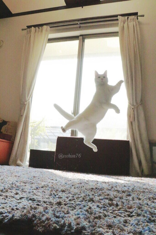 kot w rozłożystym podskoku
