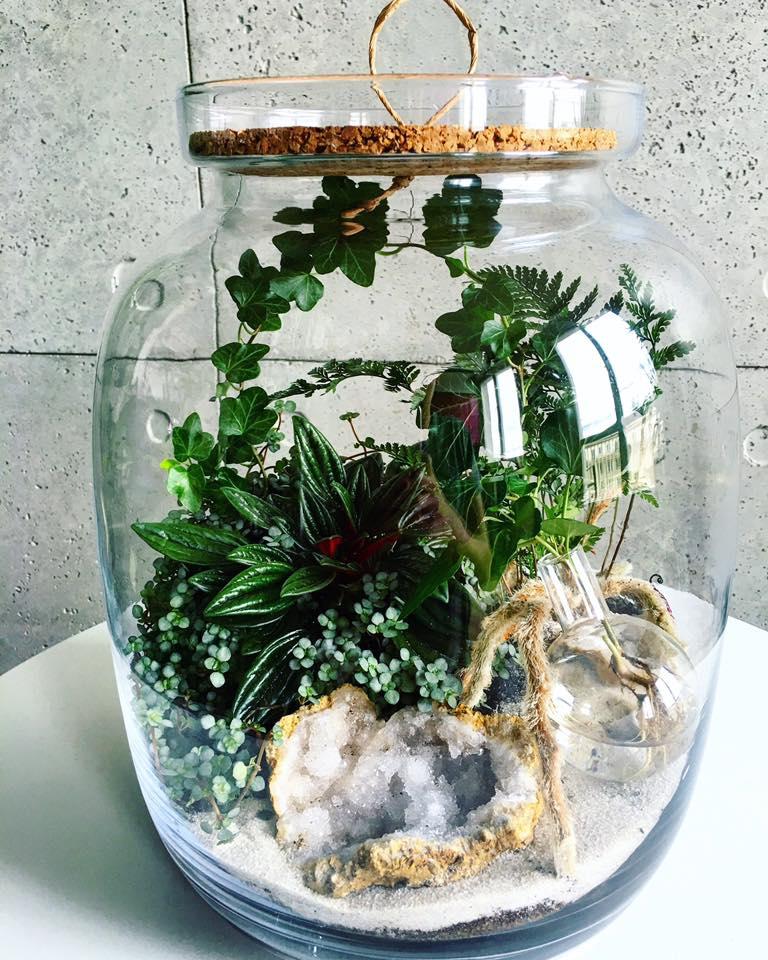 rośliny w słoiku