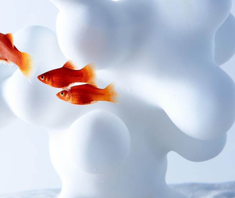 ryby na tle obłego, białego kształtu