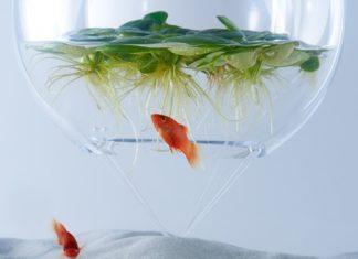 ryby w szklanej kuli z roślinami