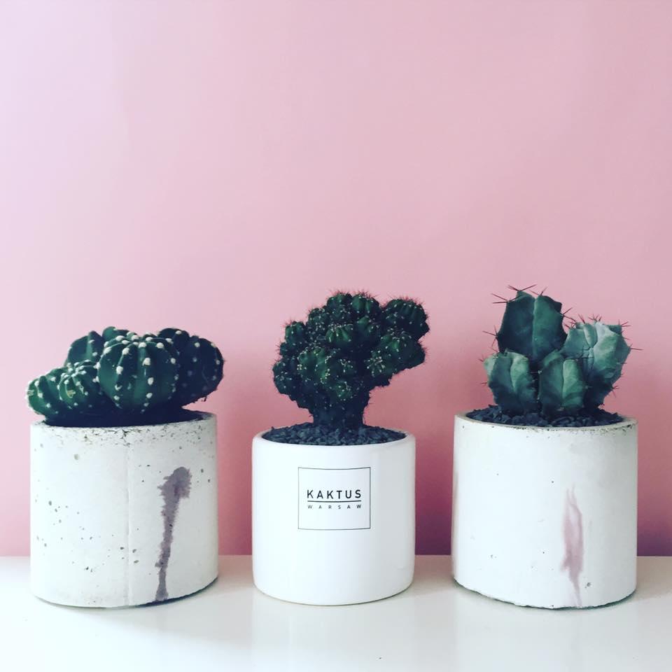 kaktusy z warszawy