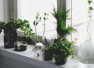 zielone rosliny i wazony szklane