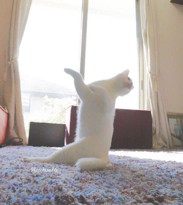 kot w niestandardowej pozycji siedzącej