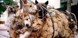 psy w klatce