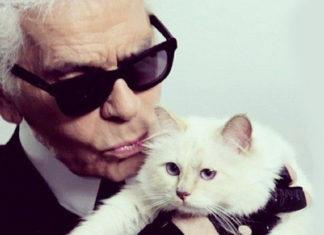 Mężczyzna z siwymi włosami, ciemnymi okularami całuje białego kota