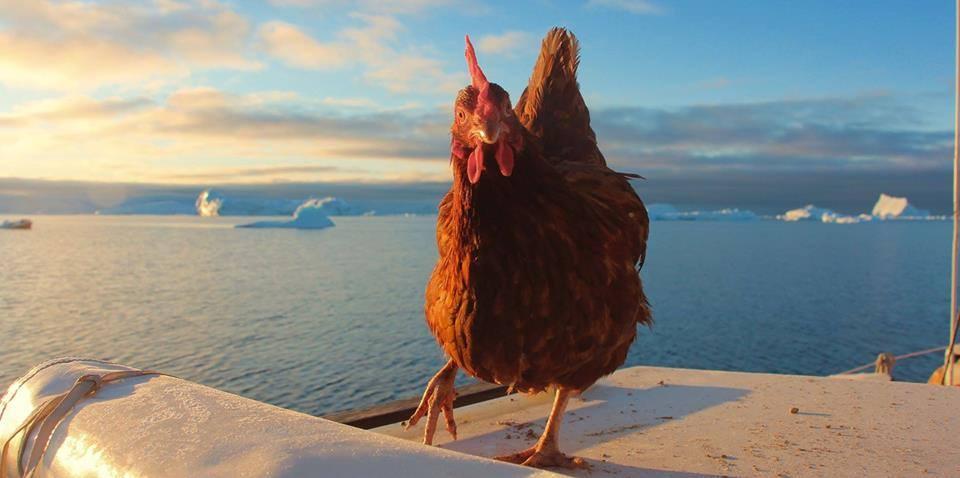 Ruda kura na tle oceanu