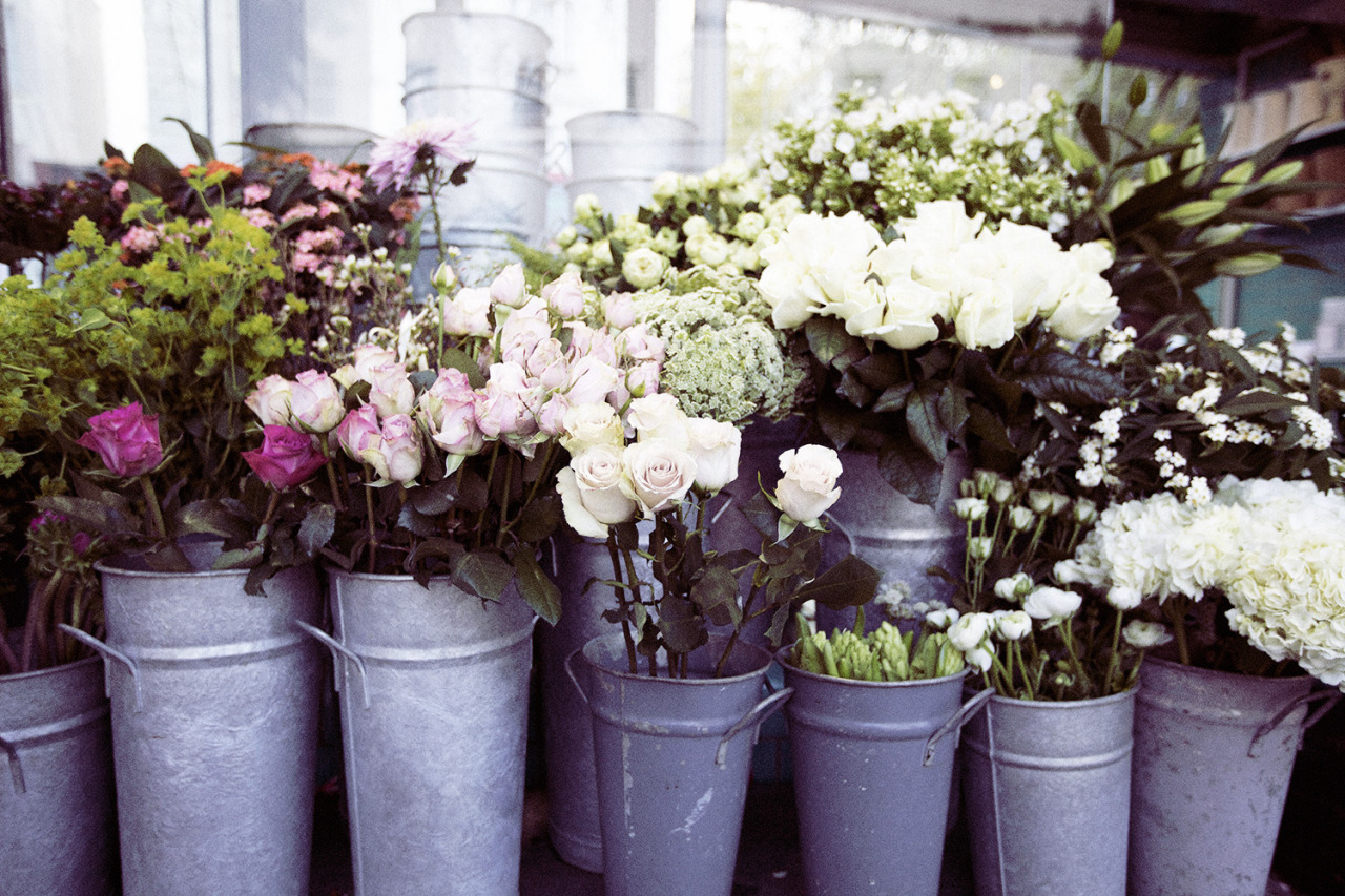 Róże w metalowych wiaderkach