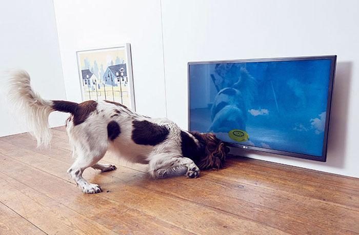 Pies w muzeum