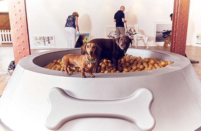 Psy w basenie z psią karmą w kształcie miski