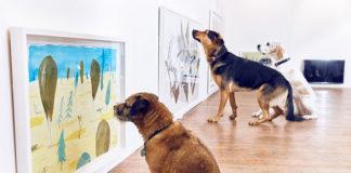 Psy patrzą na obrazy w galerii sztuki