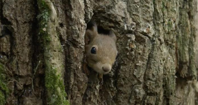 Wiewiórka w dziupli