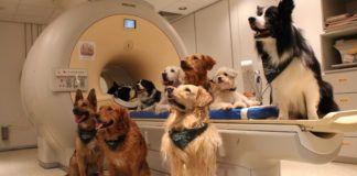 Psy w laboratorium